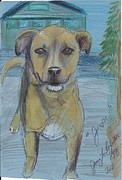 Mutt Drawings - Here Boy by Jamey Balester