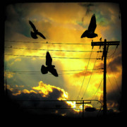 Starlings Metal Prints - Here Comes The Sun Metal Print by Gothicolors And Crows