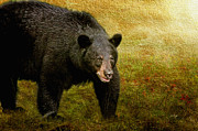Bears Digital Art - Here Comes Trouble by Lois Bryan