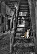 Philadelphia Photo Prints - Here Kitty Kitty Kitty... Print by Evelina Kremsdorf