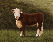 Cow Framed Prints - Hereford Heifer Framed Print by Michelle Wrighton