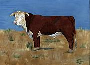 Steer Paintings - Hereford by Sara Stevenson