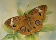 Buckeye Prints - Heres Looking at You Print by Patricia Pushaw