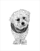 Cute Dogs Drawings Framed Prints - Heres NICO Framed Print by Jack Pumphrey