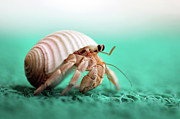 Featured Art - Hermit Crab Running by With love of photography