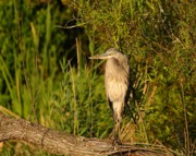 Great Birds Prints - Heron at Sundown Print by Al Powell Photography USA