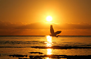 Wading Bird Photos - Heron at Sunrise by Matt Tilghman
