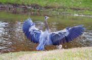 Deborah Benoit - Heron Bank Landing