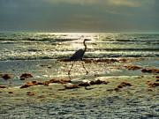 Heron Beachwalk Print by Michael Garyet