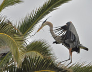Southern California Photo Originals - Heron in the palm by Matt MacMillan