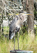 Heron Pyrography - Heron in the Park by Brenda Alcorn