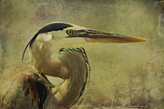 Blue Heron Framed Prints - Heron On Texture Framed Print by Deborah Benoit