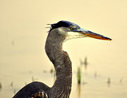 Heron One Print by Marty Koch