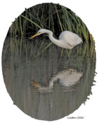 Egret Digital Art Posters - Heron Reflection Poster by Larry Linton