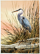 Wildlife Art Posters Posters - Heron Sunset Poster by James Williamson