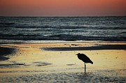 Michael Digital Art Posters - Heron Waiting for the Sunrise Poster by Michael Thomas