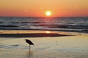 Michael Digital Art Posters - Heron Watching Sunrise Poster by Michael Thomas