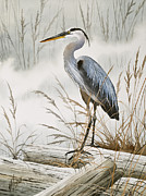 Heron Art - Herons Misty Shore by James Williamson