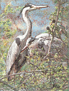 Richard Pastels - Herons resting by Richard James Digance