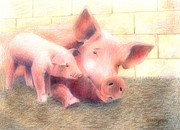Farm Animals Pastels Prints - Hey Mom...Are You Awake Print by Arline Wagner