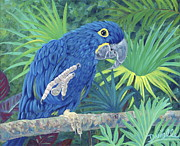 Tropical Birds Art - Hi Blue by Danielle  Perry