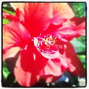 Christy Bruna Art - Hibiscus by Christy Bruna