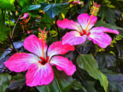 Moorea Paintings - Hibiscus by Dominic Piperata