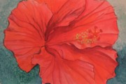 Donna Pierce-clark Art - Hibiscus by Donna Pierce-Clark