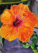 Hibiscus Print by Michelle Hand