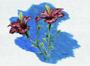 Color Pencil Paintings - Hibiscus by Peter Piatt