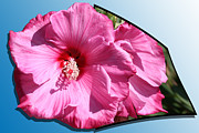 Petals Mixed Media - Hibiscus by Shane Bechler