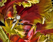 Florida Flower Prints - Hibiscus Spice Print by Joetta West