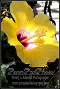 Botany Pyrography Prints - Hibiscus Two Print by Penny Johnson