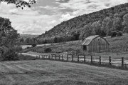 Finger Lakes Photo Originals - Hickory Hills 0425 by Guy Whiteley