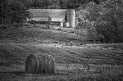 Shed Digital Art Metal Prints - Hidden Away in Black and White Metal Print by Mary Timman