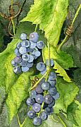 Purple Grapes Framed Prints - Hidden III part 2 Framed Print by Mary Tuomi