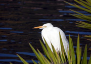 Florida Pond Photos - Hidden by Kenneth Albin