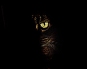 Kitty Cat Photo Prints - Hidden Kitty Under The Cover Of Darkness Print by Andee Photography