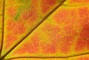Vivid Fall Colors Framed Prints - Hidden Mosaic Framed Print by Luke Moore