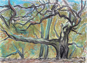 Tree Framed Prints Drawings Prints - Hidden Oak and Canyon in Briones Park Print by Asha Carolyn Young