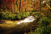 Tamyra Ayles Metal Prints - Hidden River Metal Print by Tamyra Ayles