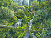Yellowstone Paintings - Hidden Spring by Steve Spencer