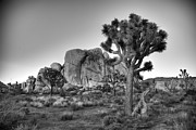 Joshua Tree Prints - Hidden Valley Rock Print by Peter Tellone
