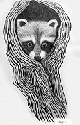 Raccoon Drawings - Hiding out by Nick Gustafson