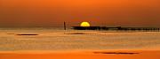 Hiding Sun Print by Steffen Welsch