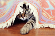 Hardwood Floor Prints - Hiding Tabby Cat Print by Hulya Ozkok