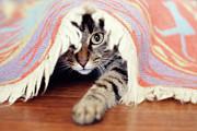 Hiding Tabby Cat Print by Hulya Ozkok