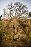 Autumn Photographs Photos - High Country Autumn View by James Bo Insogna