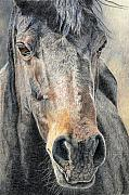 Horse Drawings Posters - High Desert  Poster by Joanne Stevens
