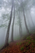 Rain Photo Posters - High Forest Poster by Evgeni Dinev